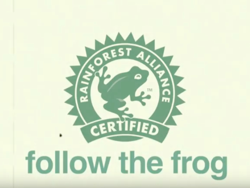 Video des Monats «Follow the Frog»